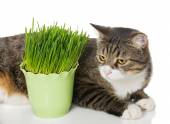 Grey cat and green grass — Stock Photo