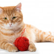 Orange cat and a sphere of red wool — Stock Photo #68175383