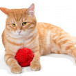 Orange cat and a sphere of red wool — Stock Photo #68175387