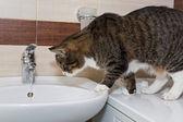 Grey cat and water — Zdjęcie stockowe