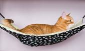 Red cat lying in a hammock — Foto de Stock