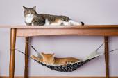 Two domestic cat sleeping — Foto de Stock