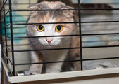 Beautiful lop-eared cat in a cage shelter — Stock Photo
