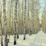 Winter birchwood — Stock Photo #64766353