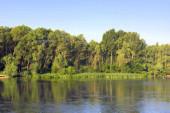 Beautiful summer landscape — Stock Photo