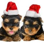 Merry Christmas — Stock Photo #55481521