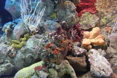 Corals in aquarium — Foto Stock