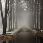 Nevoeiro no parque. — Fotografia Stock