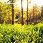 Iluminado pelo sol Glade — Fotografia Stock