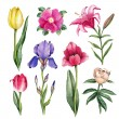 Watercolor flowers illustrations — Stock Photo #59471911