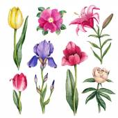 Watercolor flowers illustrations — Stock Photo