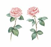 Watercolor rose flowers — Stock Photo