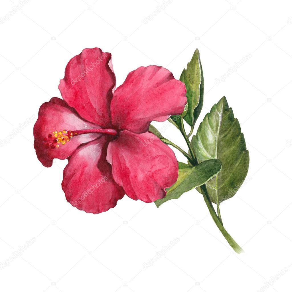 Magnolia Clipart Fleur De Magnolia Image Stock Image
