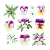 Watercolor illustrations of pansy flowers — Fotografia Stock