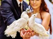 Bride and groom holding doves outdoor. — Stock Photo