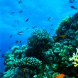 Group of coral fishes in water. — Stockfoto #75133997