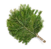 Juniper broom — Stock Photo