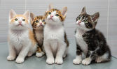 Four kittens — Stock Photo