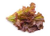Red lettuce leaves — Stock Photo