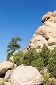 Lone Ponderosa Pine at Turtle Rocks Colorado — Stock Photo