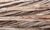 Background close up of cedar trunk bark — Stock Photo