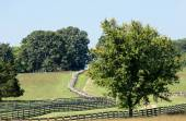 Road to Appomattox Courthouse National Park — Stock Photo