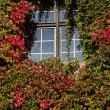 Red and green ivy surround windows on castle — Stock Photo #61426109