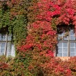 Red and green ivy surround windows on castle — Stock Photo #61426143