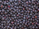 Macro shot of Blueberries — Stock Photo