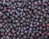 Macro shot of Blueberries — Stock Photo