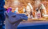 Camel in front of nativity scene — Stock Photo