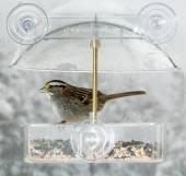 American Sparrow in window bird feeder  — Stock Photo
