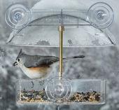 Tufted Titmouse in window bird feeder  — Stock Photo