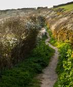 South West coast path near Port Quin, Cornwall — Stock Photo