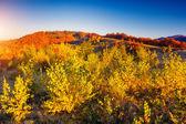 Colored autumn mountains — Stock Photo