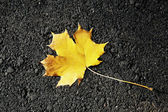 Fallen Leaf on the Road in Autumn. — Stock Photo