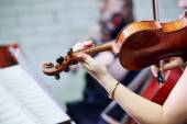Violin player musician — Stockfoto