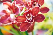 Orchid bud — Stock Photo