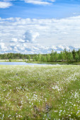 River bank in Karelia — Stock Photo