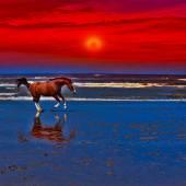 Cavalo dançarino — Fotografia Stock