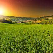 Green Fields — Stock Photo