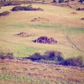 Pasture — Photo