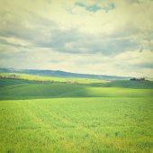 Meadows of Tuscany — Stock Photo