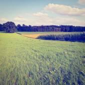 Plantation — Stock Photo
