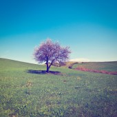 Träd — Stockfoto