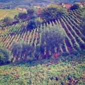 葡萄牙的山丘 — 图库照片
