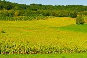 Plantation of Corn — Stock Photo
