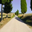 Cypress Alley — Stock Photo #65176399