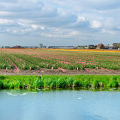 Canal d'irrigation — Photo