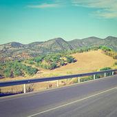 Road between Groves — Stock Photo